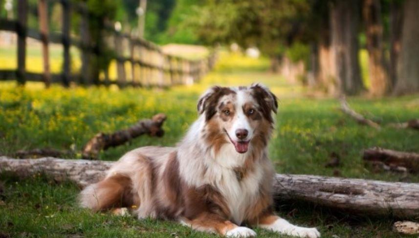 Sognare cane: Significato e Interpretazione dei Sogni