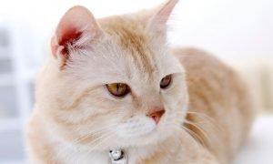 Sognare gatti: Significato e Interpretazione dei Sogni