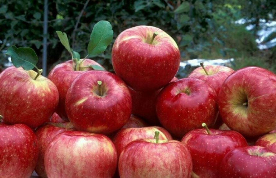 Sognare mela: Significato e Interpretazione dei Sogni