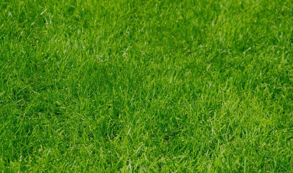 Sognare erba: Significato e Interpretazione dei Sogni