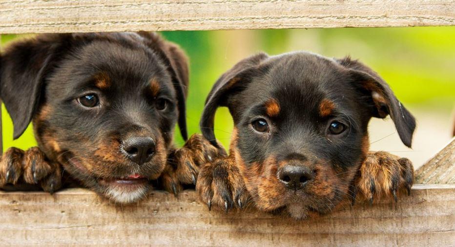 Sognare un cane o cani: Significato e Interpretazione dei Sogni