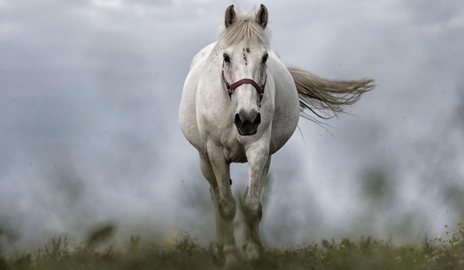 Sognare Cavallo: QUAL É IL SIGNIFICATO DEI CAVALLI NEI SOGNI?