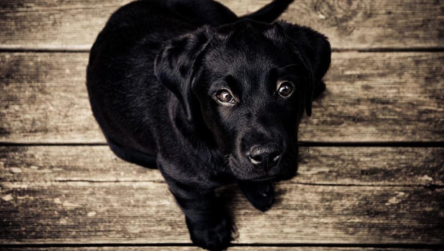 Sognare cane nero: Significato e Interpretazione dei Sogni