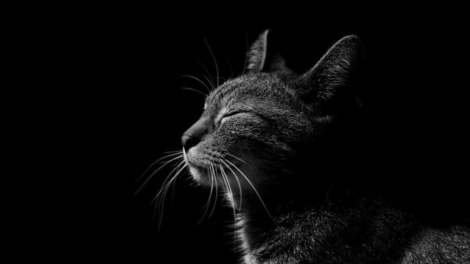 Sognare gatto nero: Significato e Interpretazione dei Sogni