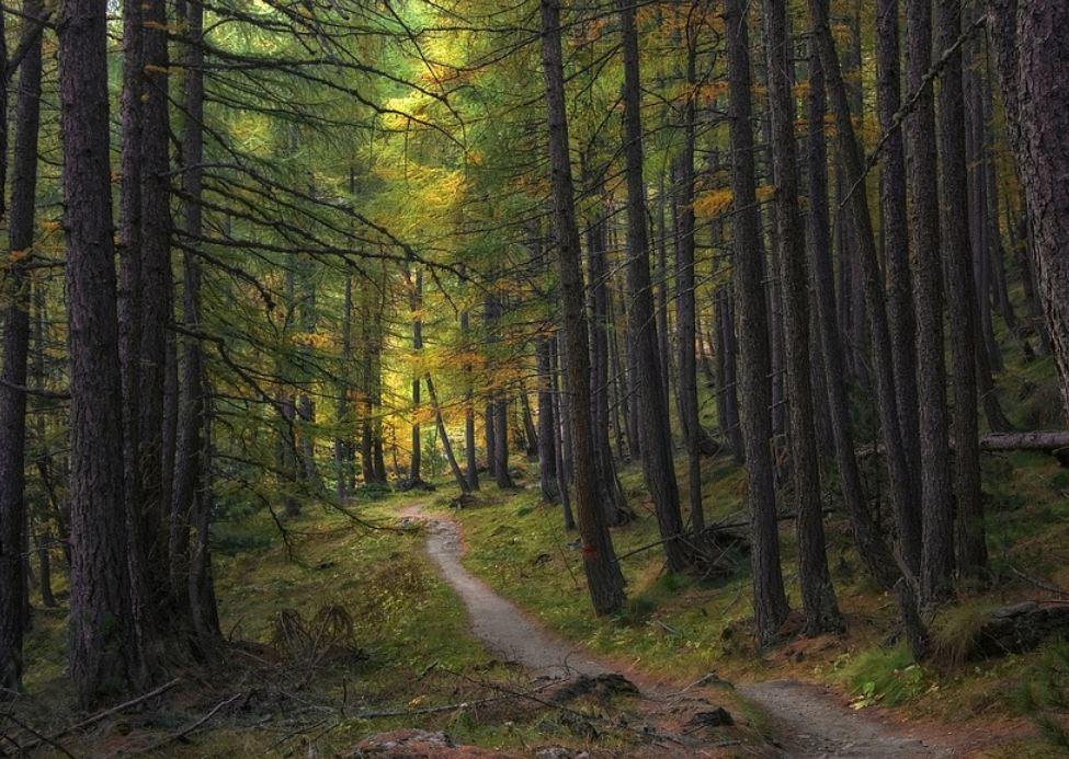 Sognare un bosco, sognare una foresta